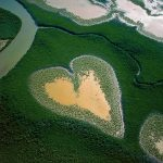 Mangroves in New Caledonia