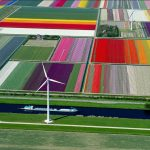 Tulip Fields, Olanda