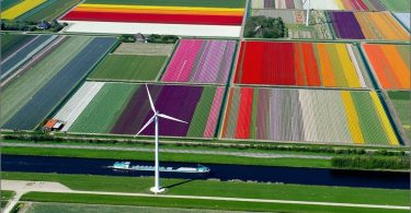 Tulip Fields, Olanda