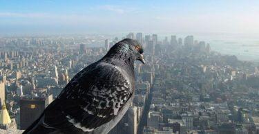 Cum ar arata lumea prin ochii unei pasari